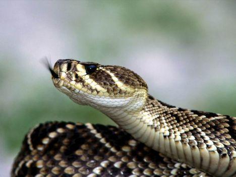 kígyók 14