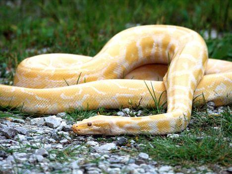 kígyók 19