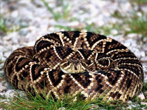 kígyók 5