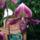 Erzsike Orchidea kialitas New York 2006