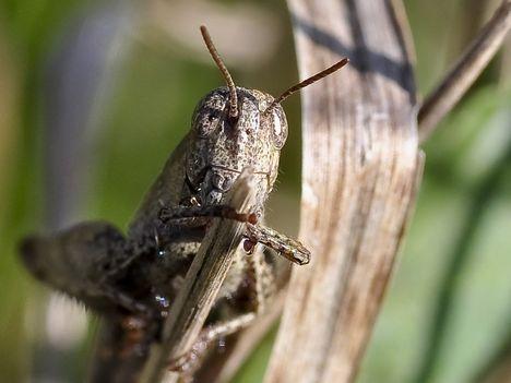 bogarak, rovarok, csúszómászók..... 2