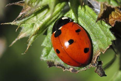 bogarak, rovarok, csúszómászók..... 4