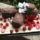 BuchedeNoel -Yule log cake Dec. 11 2009_IMG_0314