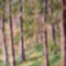Erdőbelső
