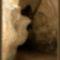 Béke-barlang, Jósvafő Magyarország 21