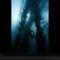 Giant Kelp Fronds