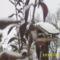 pintyek százai lepik el télen a kertemet