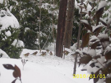 tél idején etetni kell őket