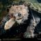 Freshwater Turtle, United States, 1996