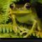 Frog On Fern, São Paulo, Brazil, 2001