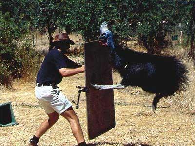 állat támadások 10