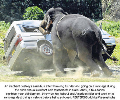 állat támadások 16