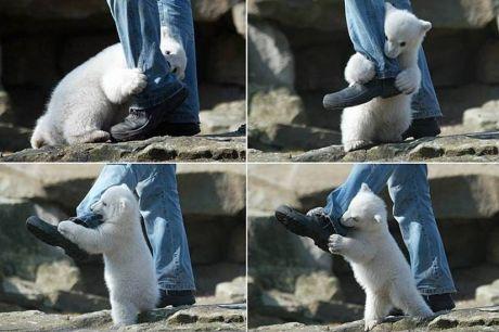 állat támadások 6