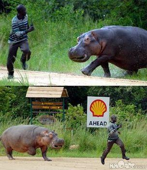 állat támadások 7