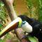 Brazíliába élő madár