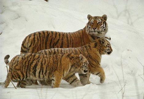 Állat család 22