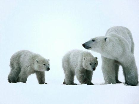 Állat család 4