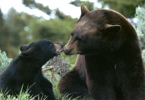Állat család 6