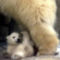 Állat család 9
