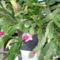 karácsonyi kaktuszom 2