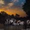 Ivory Wars, Wildlife Oasis
