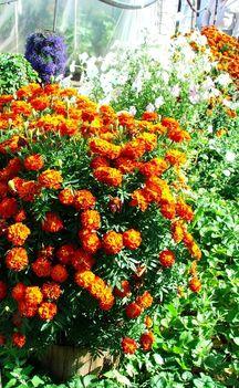 Virág termőoszlopon - Kertmagyarország haztartas.com
