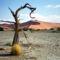 Gnarled Tree, Namib Desert, Namibia