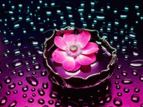 Petals and Water