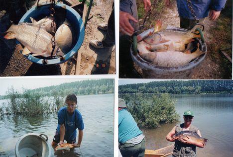 Telepítések, fogások a dányi horgásztónál