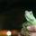 Iguana_icon_537800_81011_t