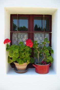 Muskátlis ablakunk