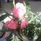 virág 004