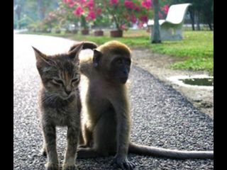 Állati kölykök 2