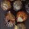 Aranyozott gyöngyök