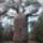 Baobabteapotifaty_53021_838960_t