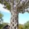 basket-tree