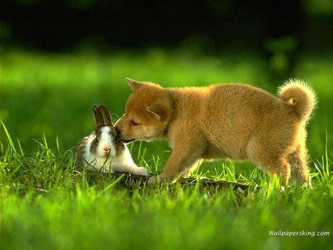 """""""állati"""" csók 17"""