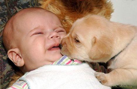 """""""állati"""" csók 18"""