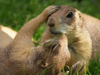 """""""állati"""" csók 5"""