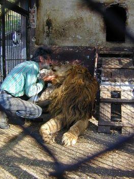 """""""állati"""" csók 7"""