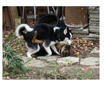 """""""állati"""" csók 9"""