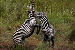 """""""állati"""" csók 1"""
