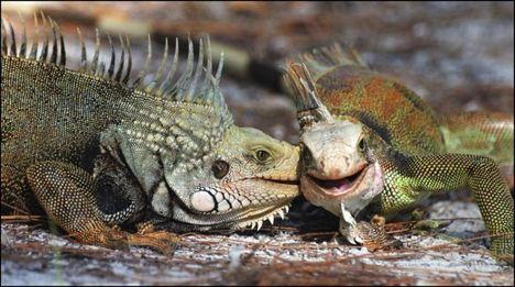 """""""állati"""" csók 13"""