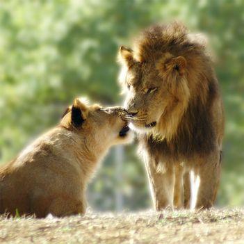 """""""állati"""" csók 14"""