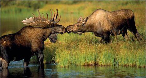 """""""állati"""" csók 15"""