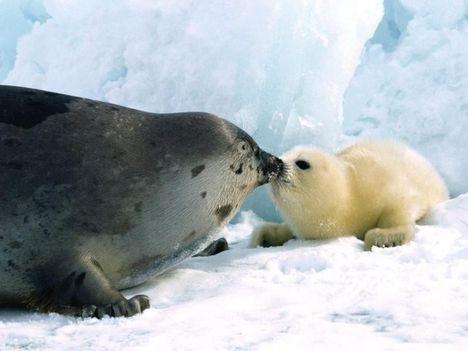 """""""állati"""" csók 16"""