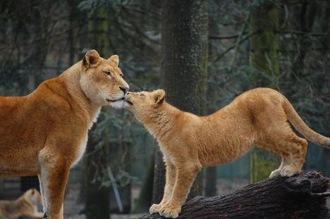 """""""állati"""" csók 2"""