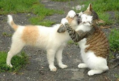 """""""állati"""" csók 30"""