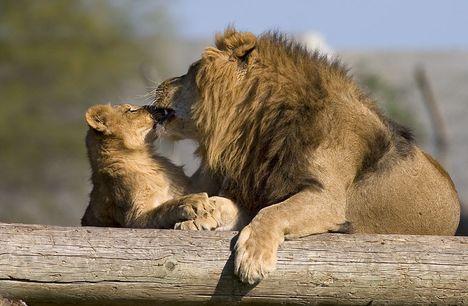 """""""állati"""" csók 32"""