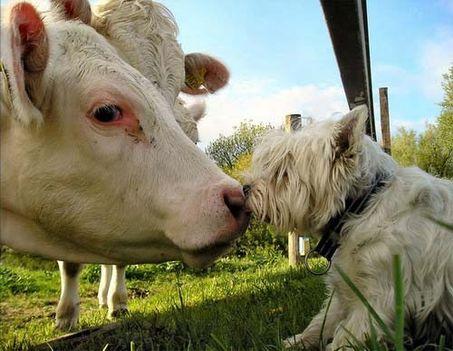 """""""állati"""" csók 33"""